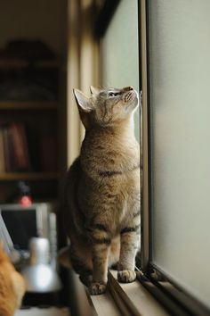 """""""There is no need for a piece of sculpture in a house that has a cat."""" --Wesley Bates"""