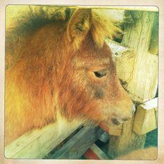 Melkorka - the slaughter house foal | Eyelove Horses