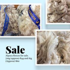 Alpaca fleece for sale Jan 2018 breakfast # alpacacrat # alpacasvictoria Jan 2018, Alpacas, Fiber, Breakfast, Morning Coffee, Low Fiber Foods
