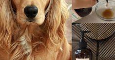 APPLE CIDER VINEGAR-NATURAL ORGANIC SOLUTIONS David Utter, Dog Trainer: Service & Therapy Dogs, PTSD, Depression, Panic Attacks, Behavior Modification, Obedience. Train and Board. (http://dogtrainingorangecountyca.com/)www.DavidUtter.com (www.Pack-buddy.com) 1-888-959-7463