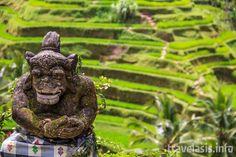Статуя на фоне рисовых террас недалеко от города Убуд, Бали