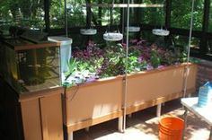 Aquaponics installation