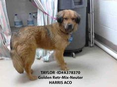 Family dog surrendered to Texas animal control dies today - PLEASE HELP TAYLOR!
