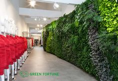 Plantwall, Greenwall, Green Fortune, Claudia S