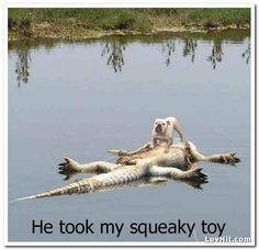 Funny Animals he took my squeaky toy dog with crocodile