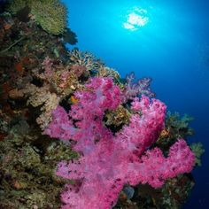 underwater coral reef...not sure where, but from my friend jack connicks' website.../opticaloceansales.com