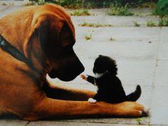 os animais são muito inteligentes e também uma boa compoanhia