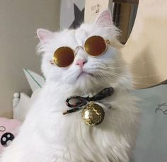 pets // for: Funny Cats, Funny Animals, Cute Animals, Crazy Cat Lady, Crazy Cats, I Love Cats, Cool Cats, Costume Chat, Gatos Cats