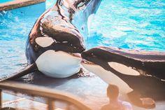 Parques de Orlando SeaWorld Beijo