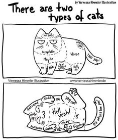 There are two types of cats . Browse new photos about There are two types of cats . Most Awesome Funny Photos Everyday! Because it's fun! Funny Animal Memes, Funny Animal Pictures, Cute Funny Animals, Cat Memes, Funny Cute, Cute Cats, Funny Memes, Mom Funny, Jokes