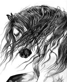 Cheryl Miller, cheryl-poland.artistwebsites.com/  Bic Pen drawing of an Arabian-Andalusian cross stallion with black points.