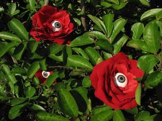 Creepy roses. Place silk roses with plastic eyeballs in bushes or flower pots. How creepy!!