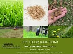 Weed treatments are applied on a spot treatment basis applying only when and where needed. Fast Quotes, Weed Control, Spot Treatment, Lawn, How To Apply, Weeding