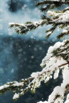 Hd Image Winter Central Park Central Parks Wallpaper Jpg
