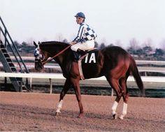 SECRETARIAT - ORIGINAL 1972 GARDEN STATE STAKES HORSE RACING PHOTO! in Sports Mem, Cards & Fan Shop, Fan Apparel & Souvenirs, Horse Racing | eBay
