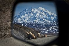 What a shot.  Bears in the side view mirror.  Look at that mountain