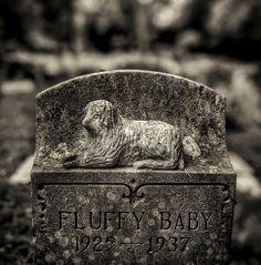 📷 Allan Janus Pet Cemetery, Janus, Sculptures, Rings For Men, Rest, Carving, Peace, Stone, Dogs