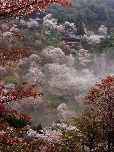 Cherry blossoms at Mount Yoshino, Nara, Japan
