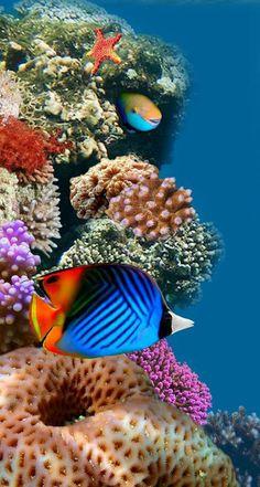 aplysina fistularis | coral | pinterest | unterwasser, meerwasser aquarium und korallen