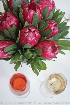 South Africa - land of wine and proteas ;)