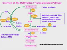 Detoxification & Methylation-- Detoxification & Methylation important information for individuals on the Autism Spectrum