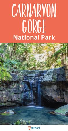 Our readers recommended we visit Carnarvon Gorge National Park and we're so glad we did! Croatia Travel, Thailand Travel, Bangkok Thailand, Italy Travel, Visit Australia, Australia Travel, Western Australia, Lithuania Travel, Australian Road Trip