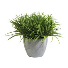 Grass in Aged Gray Pot ,  , large