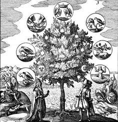 el árbol de los 7 planetas rodeado de los 7 grados de la obra alquímica. Por Mylius en Philosophia reformata, Frankfurt 1622.