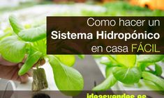 15 Ideas Revolucionarias para hacer Invernaderos por nada o muy poco dinero - Ideas Verdes Aquaponics, Sprouts, Spinach, Cactus, Herbs, Vegetables, Food, Ideas Geniales, Industrial