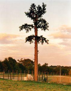torre de telefonía celular disfrazado de árbol (6)