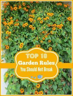 Top 10 Gardening Rules You Should Not Break