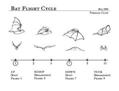 Bat Flight Cycle by rillani