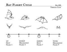 Bat Flight Cycle by rillani