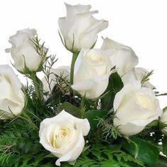 ♥♥ღPatrícia Sallum-Brasil-BH♥♥ღ White roses Beautiful Flowers Wallpapers, Beautiful Rose Flowers, Pretty Roses, Flowers Nature, Exotic Flowers, Pretty Flowers, White Flowers, Colorful Roses, Orquideas Cymbidium