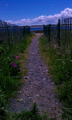 path to water at Salisbury MA Reservation by L Kells