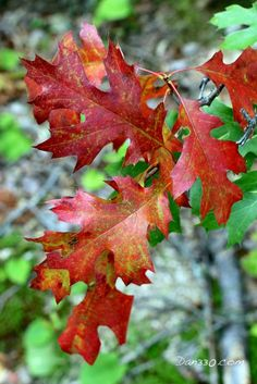 The fall colors are coming to Elbow Lake Lodge