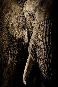 """""""Η δύναμη της μητριαρχίας"""" από τον David Lloyd (Νέα Ζηλανδία/Ηνωμένο Βασίλειο). Εθνικό πάρκο Maasai Mara στην Κένυα. Φιναλίστ στην κατηγορία: πορτρέτα ζώων. Φωτογραφία: David Lloyd/2017 Wildlife Photographer of the Year"""