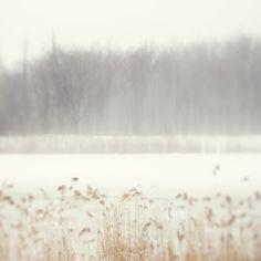 eye poetry - the photo blog of fine art photographer Irene Suchocki: All was quiet