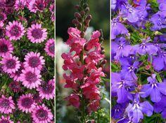Magok, amelyeknek fényre van szükségük a csírázáshoz Neon, Garden, Plants, Flowers, Garten, Lawn And Garden, Neon Colors, Gardens, Plant