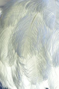 We <3 Ostrich Plumes especially dyed colors of wedding