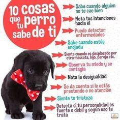 ¿ Conoces las cosas que tu perro sabe de ti ?..
