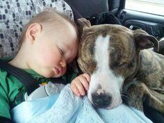 pitbulls. Aka nanny dogs!