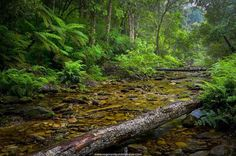 A riverine scene at Jubilee Creek in the indigenous forests near Rheenendal on the Garden South in South Africa.