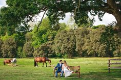 Castlemartyr Resort grounds - Irish Wedding Venue of the Month March 2017 - Co Cork Wedding Venues, Wedding Photos, Wedding Ideas, Irish Wedding, Cork, Photo Ideas, Wedding Planning, March, Horses