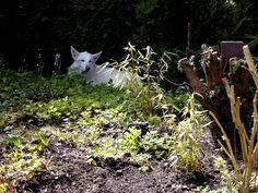 Verstoppertje achter gras :) (en dan er vandoor)