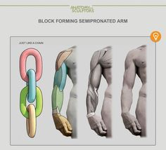 Block forming semipronated arm by Anatomy Next
