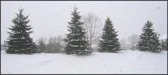 Winter ~ Twinsburg Ohio 2006