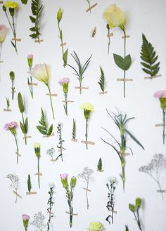 plants / flowers / home decor Flower Factory, Flower Wall Wedding, All About Plants, Floral Backdrop, Pressed Flower Art, Aesthetic Drawing, Nature Plants, Autumn Art, Botanical Art