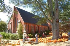 The Rector by Michael Hicks Thompson Proves to be Fun, Fabulous Murder Mystery! Great Pumpkin Charlie Brown, It's The Great Pumpkin, Tailgate Tent, How To Make Drinks, Magnolia Trees, Ole Miss, Episcopal Church, Going Home, Great Books