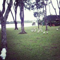 Parque Barigui- Curitiba-PR.